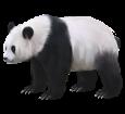 Panda - Fell 65