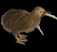 Kiwi - Fell 52