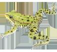 Frosch - Fell 72