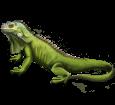 Leguan - Fell 72