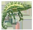 Afrikanisches Chamäleon - Fell 72