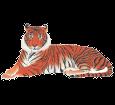 Tiger - Fell 1340000005