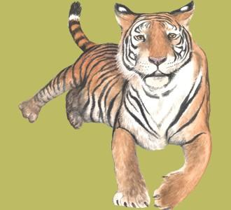 Ein Dschungeltier von der Art tiger aufnehmen