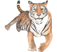 Tiger - Fell 42