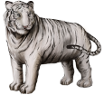 Weiße Tiger - Fell 9