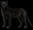 Schwarze Panther - Fell 51