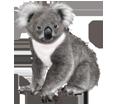 Koala - Fell 52